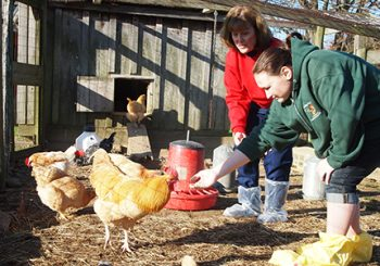 Salmonella and Backyard Chickens: Are your pets in danger?  What you need to know…