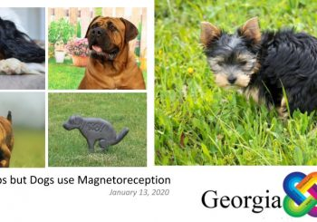 Everyone Poops- but Dogs use Magnetoreception