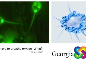 Animals don't have to breathe oxygen- What?