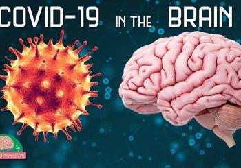 SARS-COV2 and the Brain